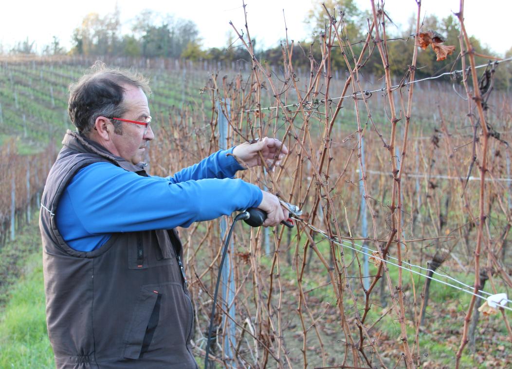 UG Bordeaux taille de vigne gelée 4